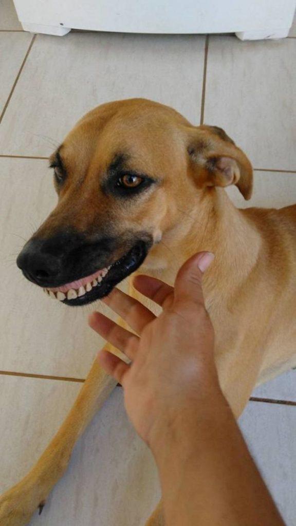 perro con dentadura