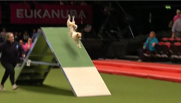 perro torpe