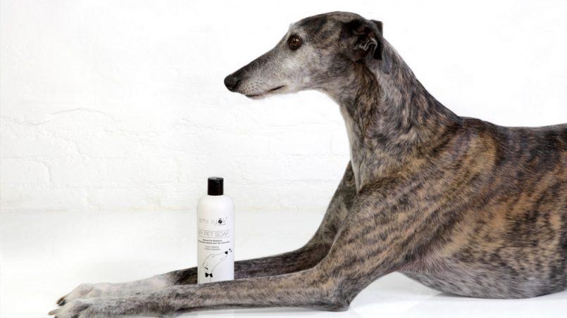 champú natural para perros
