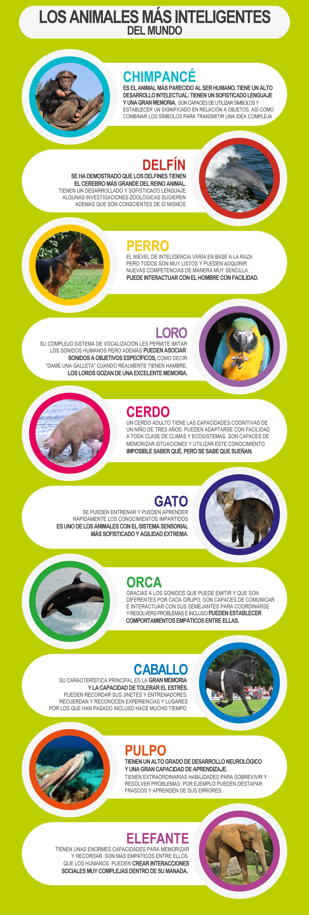 animales más inteligentes