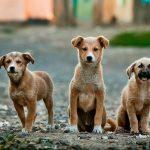 joven abraza a perros callejeros