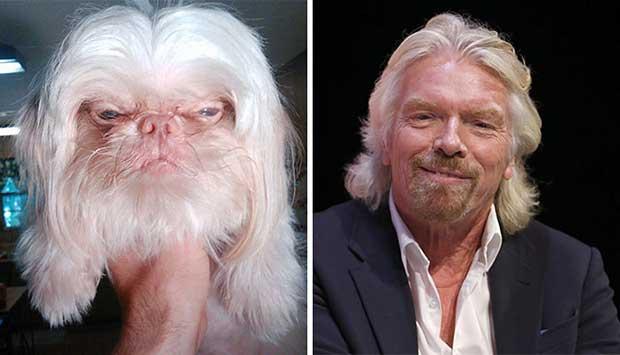famosos que parecen perros