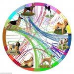 mapa genético del perro