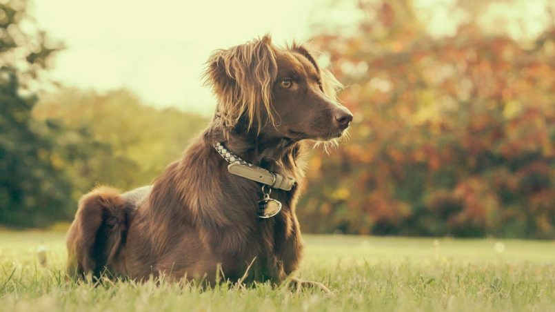 perros de terapia