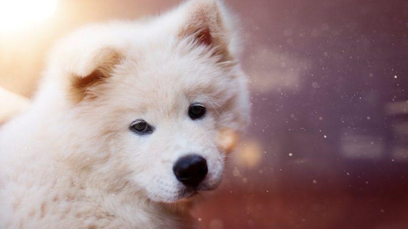 agresividad en perros