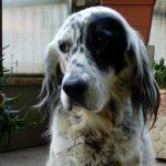 baja laboral para cuidar a perro