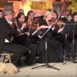 perro en concierto de música