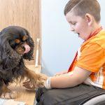 intervenciones asistidas con perros