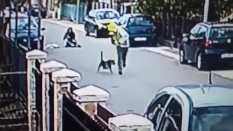 perro ataca a asaltante