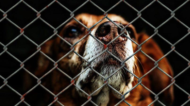 ley de protección de animales de compañía