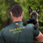 opositar para Guardia Civil