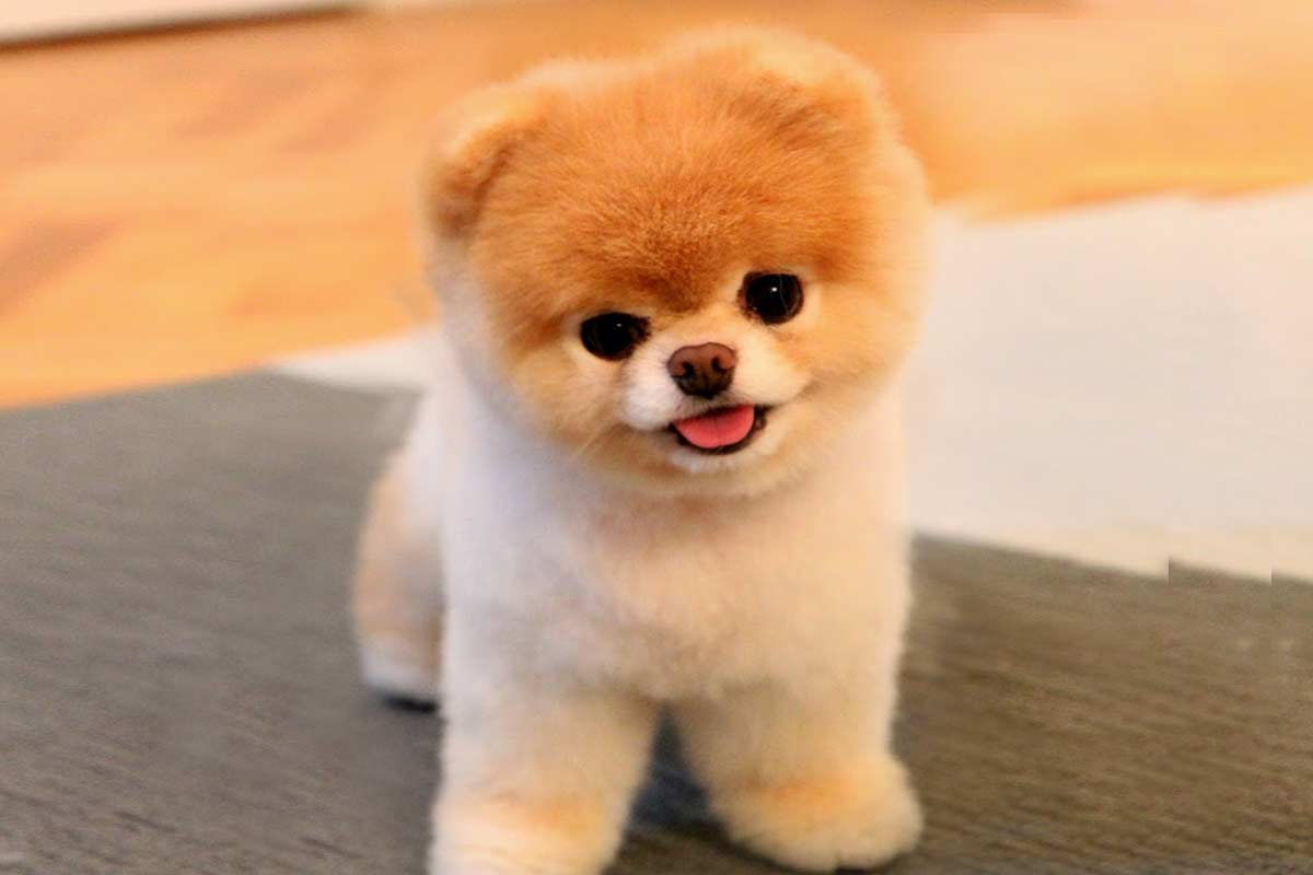 perro más bonito del mundo